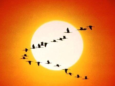 Agricultura amplia el periodo de caza de algunas especies migratorias dadas las condiciones metereológicas