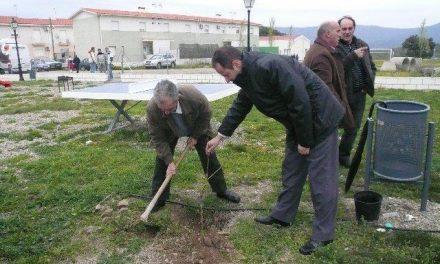 Villanueva de la Sierra solicita apoyos a la administraciones para la 207 edición de la Fiesta del Árbol