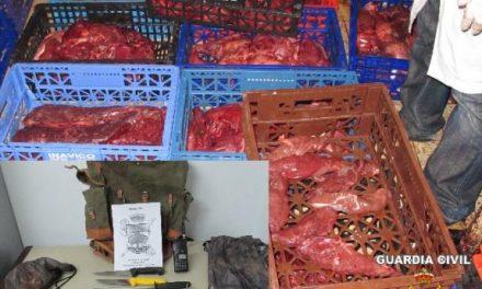 El Seprona sorprende a un presunto furtivo cuando transportaba más de 200 kg de carne de cuatro ciervos