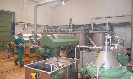 La Milagrosa de Monterrubio alcanza un récord de producción al recolectar 8 millones de kilos de aceituna