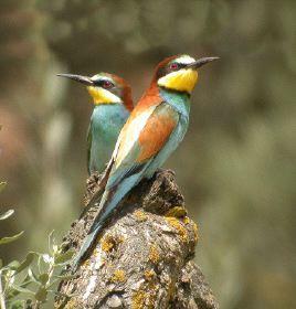 El Centro de Educación Ambiental de Cuacos de Yuste impartirá en marzo un taller de ornitología