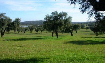 Medio Ambiente realizará un diagnóstico de los problemas que presenta la dehesa en Extremadura