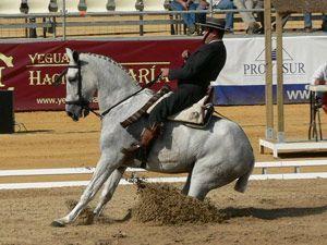 La Concejalía de Educación de Moraleja organiza un taller sobre  cuidados y doma del caballo