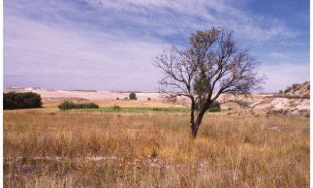 Organizaciones agrarias y cooperativas extremeñas demandan medidas urgentes frente a la sequía