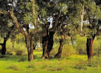 El sector corchero extremeño y el catalán colaborarán para la certificación de la huella de carbono en el corcho