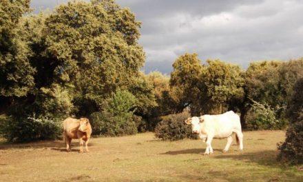 """El consejero de Agricultura insiste en que la integración es el """"camino a seguir"""" en el sector agroganadero"""
