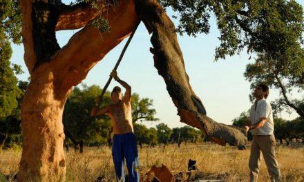 Las ciudad de Cáceres será sede el próximo día 27 de un seminario sobre la saca del corcho
