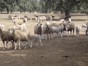 Una jornada analizará la I+D+i en los sectores ovino y caprino en el Centro de Investigación La Orden