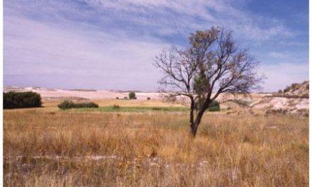 El consejero de Agricultura planteará al Consejo de Gobierno medidas contra los efectos de la sequía