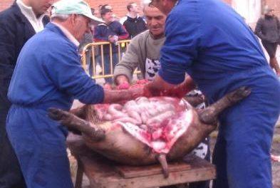 Riolobos participa por primera vez en Primavera en la Dehesa con una matanza tradicional este domingo