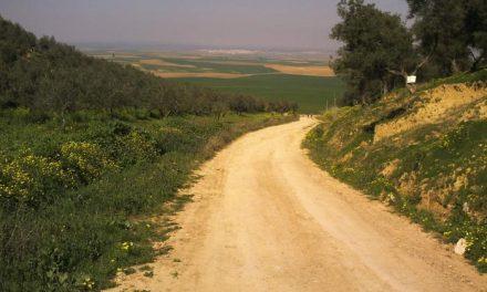 La Consejería de Agricultura abre el proceso para contratar los trabajos de mejora de caminos rurales en Alcántara