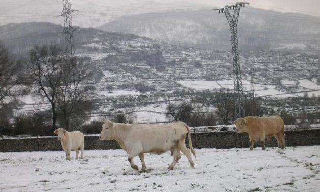 El 112 de Extremadura mantiene el nivel de alerta naranja por nieve y activa el amarillo por vientos