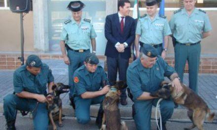 El Gobierno de Extremadura dona tres perros al Servicio Cinológico  y Remonta de la Guardia Civil