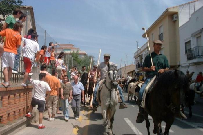 El encierro de los bueyes a caballo dará el pistoletazo de salida a las fiestas de San Juan de Coria este sábado