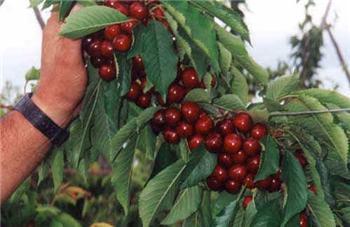 Agricultura apuesta por la formación agraria con ayudas que llegarán a los 500.000 euros durante este año
