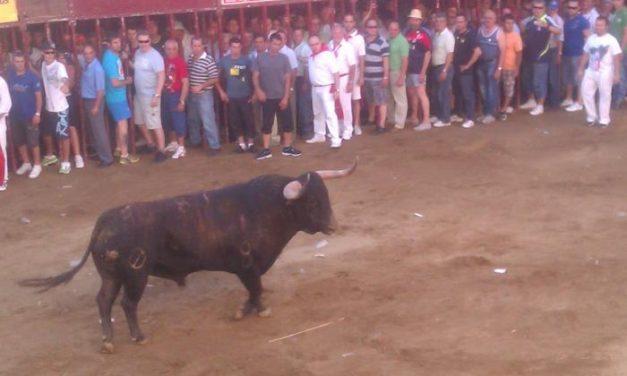 La lidia del toro Pitanguero en la Plaza de España de Coria finaliza con un joven aficionado herido