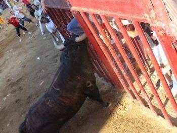 El mozo herido en la lidia de Pitanguero se recupera en el hospital de Coria de las dos heridas por asta de toro