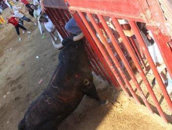 El herido por el toro Pitanguero es trasladado al Infanta Cristina para realizarle nuevas pruebas