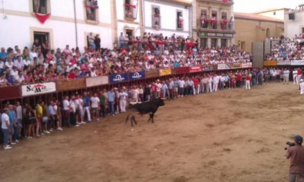 El toro de la Peña La Geta cornea a un aficionado durante el último festejo taurino de San Juan 2012