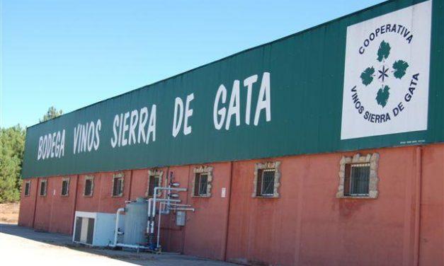 Acenorca aprovecha el verano para promocionar los vinos de Sierra de Gata entre emigrantes y turistas