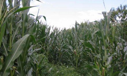 Echávarri asegura que se ha consumido el 100% del presupuesto de ayudas para los seguros agrarios en 2012