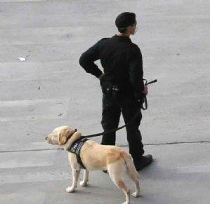 San Vicente de Alcántara estudia incorporar una unidad canina para intesificar los controles antigroga