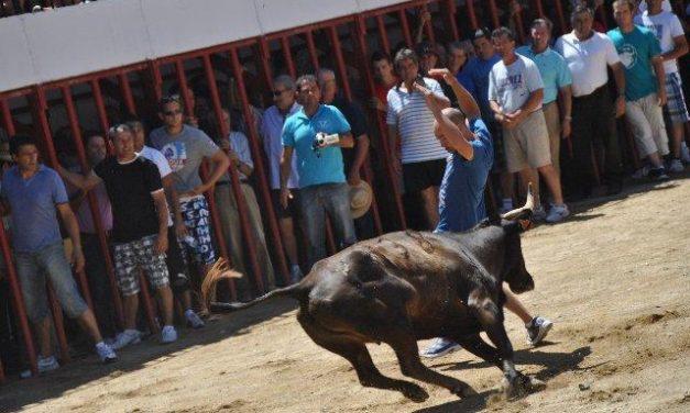 La lidia de los toros por las calles de Moraleja congrega a numeroso público y termina un día más sin heridos