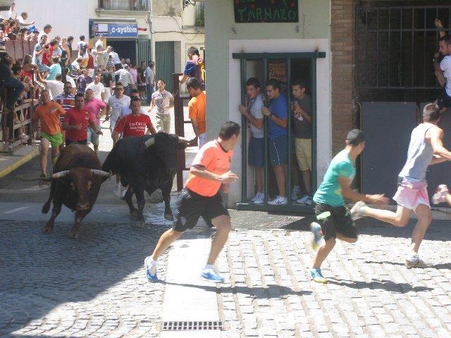 El último encierro de San Buenaventura en Moraleja termina en un tiempo récord y con momentos de emoción
