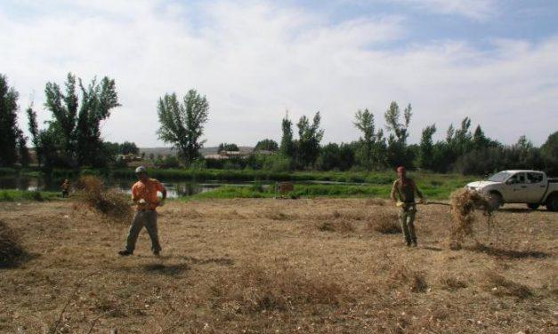 Tragsa realiza trabajos de acondionamiento de las márgenes del río Alagón a su paso por la ciudad de Coria
