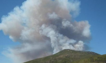 SEO/BirdLife alerta que la zona afectada por el incendio albergaba importantes colonias de cría de buitres