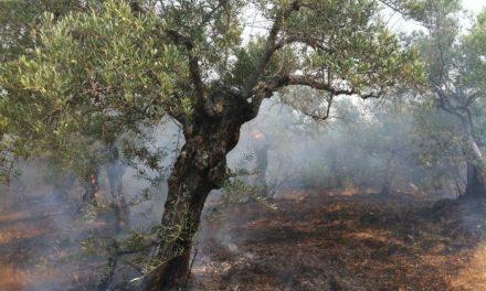 El Plan Infoex confirma que el incendio  de Sierra de Gata ha calcinado un total de 677,64 hectáreas