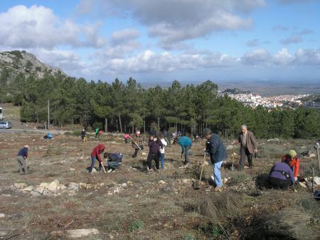 """Los montes calcinados de Las Hurdes se reforestarán con un sistema """"piloto"""" de plantación por cuadrículas"""