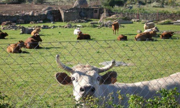 UPA-UCE denuncia que la sequía y los costes de producción arruinan al sector ganadero extremeño