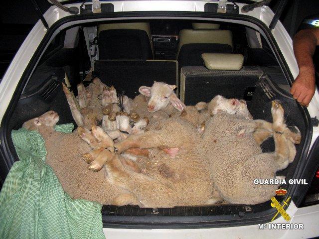 Sorprenden a tres personas cuando transportaban en un turismo 12 corderos que acababan de sustraer