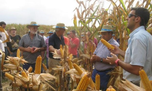 Un centenar de agricultores conoce las nuevas variedades de maíz en un campo de ensayo en Huélaga