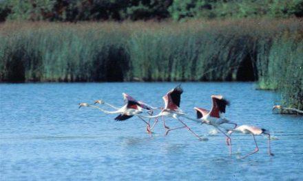Jóvenes en Acción de Sierra de Gata conocerán los diferentes ecosistemas del Parque Nacional de Doñana