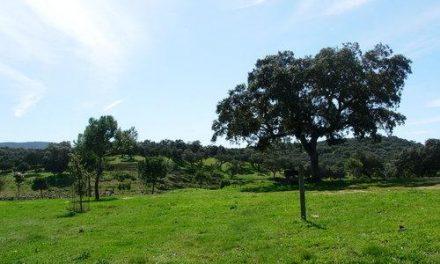 La Asociación Cúriga-Ecologistas en Acción siembra 200 plantones en parajes de Monesterio