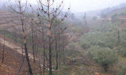 Medio Ambiente crea la comisión de seguimiento del Plan de Ordenación Forestal de la comarca de Las Hurdes