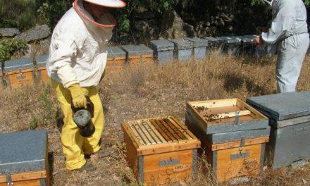 El programa sanitario apícola se desarrollará en Sierra de Gata y en Las Hurdes hasta el día 31 de agosto