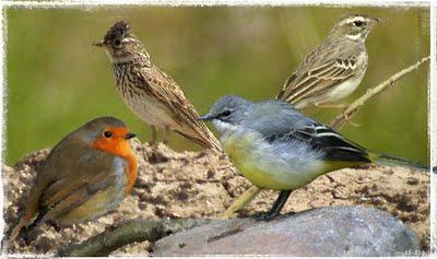El Gobierno de Extremadura colabora con SEO/BirdLife en la celebración del Día Mundial de las Aves