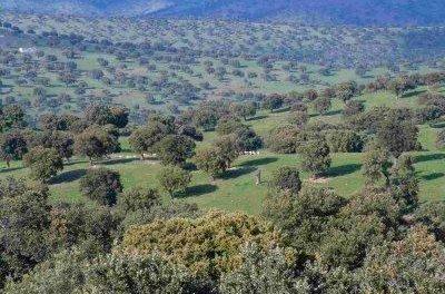Unas jornadas analizarán en Mérida alternativas para diversificar la dehesa en Extremadura