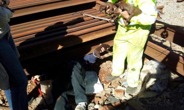 Rescantan nueve cachorros que se encontraban atrapados bajo las vías de la estación de Cáceres
