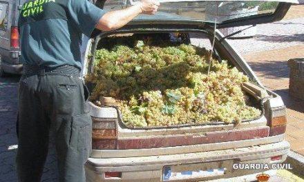 La Guardia Civil detiene a once personas acusadas de sustraer 4.000 kilos de uva en la provincia de Badajoz