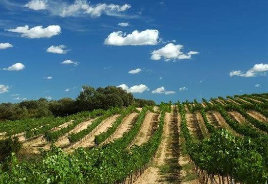 Echávarri defenderá en la UE los intereses vitivinícolas ante la posible liberalización de la plantación de viñedos