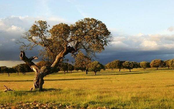 """Extremadura tiene una calidad de aire """"muy buena"""" y es de las regiones que menos gases emite"""