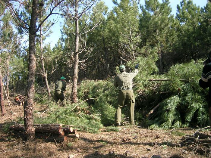 El Ejecutivo regional realizará trabajos para mejorar las masas forestales de dos  montes hurdanos