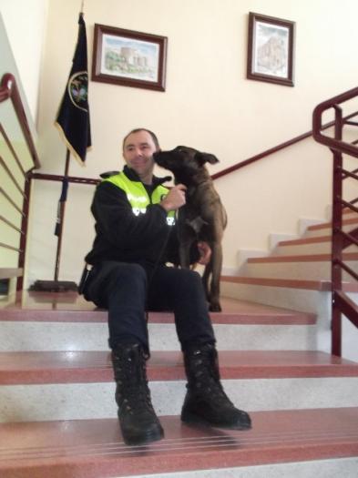 La Policia Local de Plasencia presenta a Llimi, el pastor belga que trabajará en la unidad canina de la ciudad