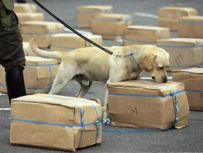Un curso para guíar a perros antidroga congregará a más de medio centenar de agentes de diversas regiones