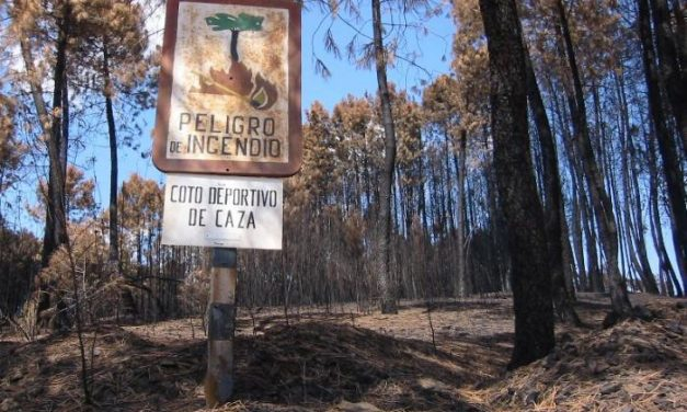 Procesado un pirómano por incendiar un bosque en 2006 en el término de Torrecilla de los Ángeles