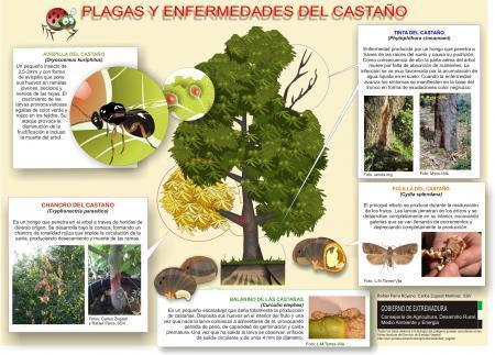 La Dirección General de Agricultura edita un cartel divulgativo de las plagas y enfermedades del castaño